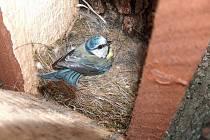 Budky využívané zpěvným ptactvem