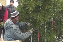 Karlovo náměstí letos opět ozdobí vánoční strom.