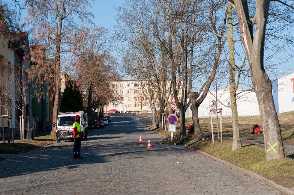 V uplynulém období vegetačního klidu bylo na povolení vykáceno 68 stromů.