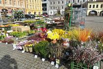 Milovníci jara i barevné zahrádky mohou nyní nakoupit krásné květiny.