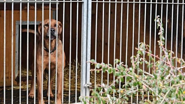 Vánoce v útulku je každoroční akce konaná v útulku pro psy Dogpoint v obci Lhotka u Malotic.
