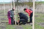 V Rostoklatech zasadili novou ovocnou alej.
