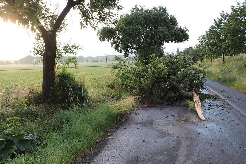 Větrem poničený strom u silnice mezi Chotouní a Českým Brodem.