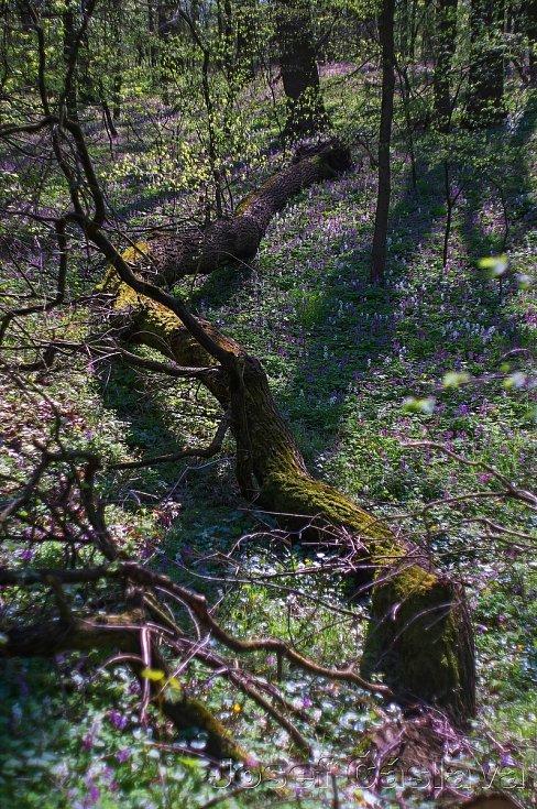 Vydejte se do romantického lesa ve Velkém Oseku.