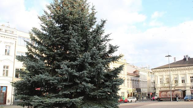 Kolín vztyčil vánoční strom.