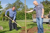 Dva červenokvěté kaštany přibyly mezi stromy rostoucí v Kolíně