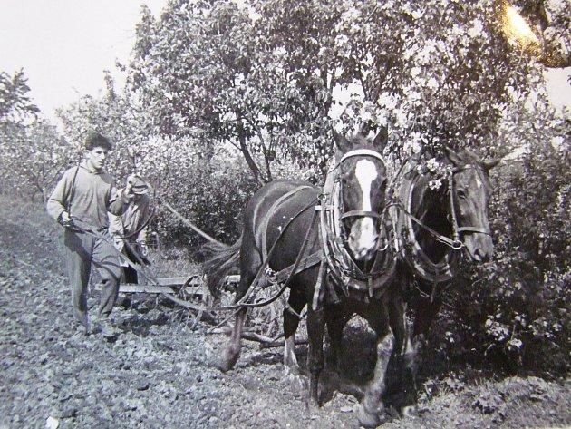 Jarní orba zahrady ve mlýně v roce 1960.
