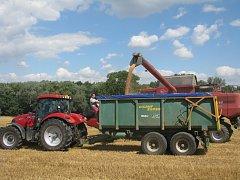 Sklizeň obilí na polích u Kbílku