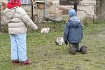 Ani kočičí sousedé o zájem dětí nepřišli