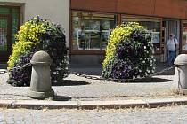 Květinová výzdoba v Kutnohorské ulici v Kolíně.