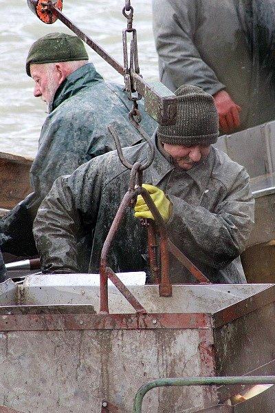 Kolik peněz si letos máte připravit na tradiční vánoční pokrm, napověděl výlov rybníku Proudnice v Hradišťku II.