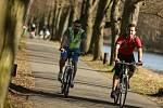 Na Labské cyklostezce mezi Poděbrady a Kolínem.