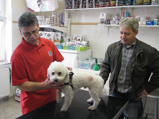 Prohlídka u veterinárního lékaře