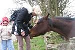 Přátelského koně v zahradě v sousedství kostela pohladil každý z kolemjdoucích.