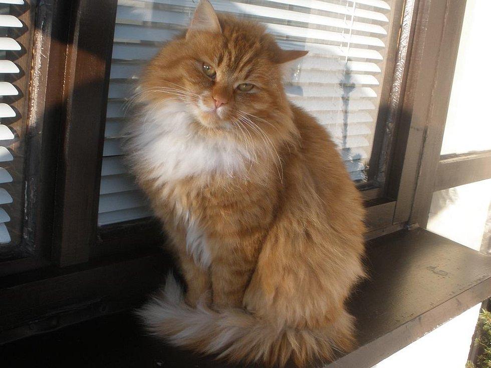 velká kořist v kočičce