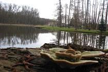 Rybník Máčidlo ve Velkém Oseku.