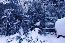 Na zaparkované auto spadl strom