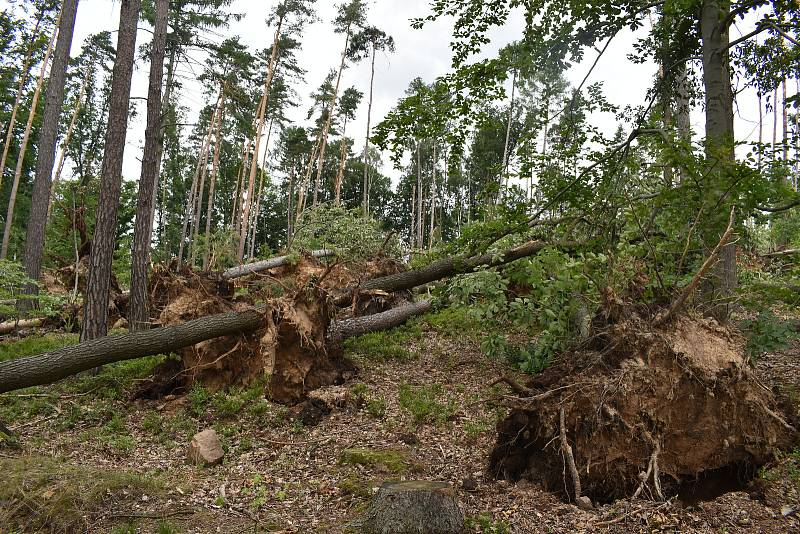 Do lesů v okolí Nemojova by lidé podle starosty vůbec neměli chodit.