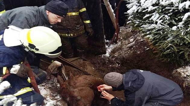 Koníkovi nepomohl ani vypřošťovací vůz semilských hasičů
