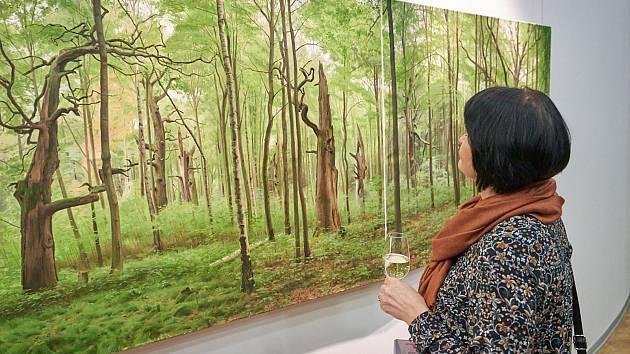 Galerie Uffo představuje Zelené obrazy.