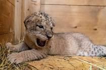 Safari park Dvůr Králové hlásí nové přírůstky