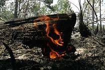 Oheň - Ilustrační foto