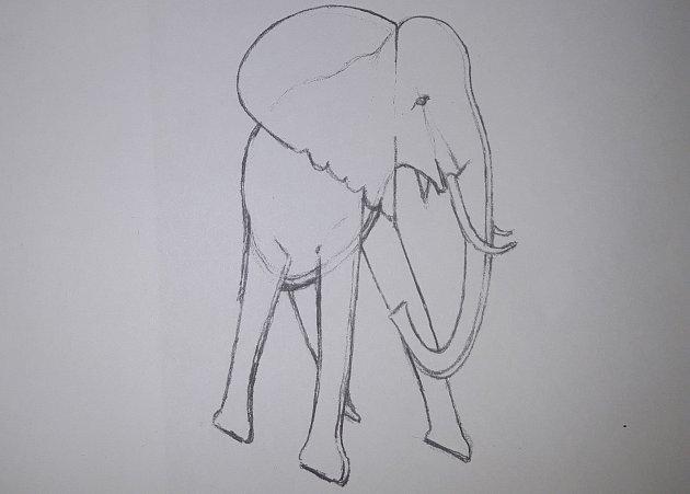 Skica 'nového' slona.