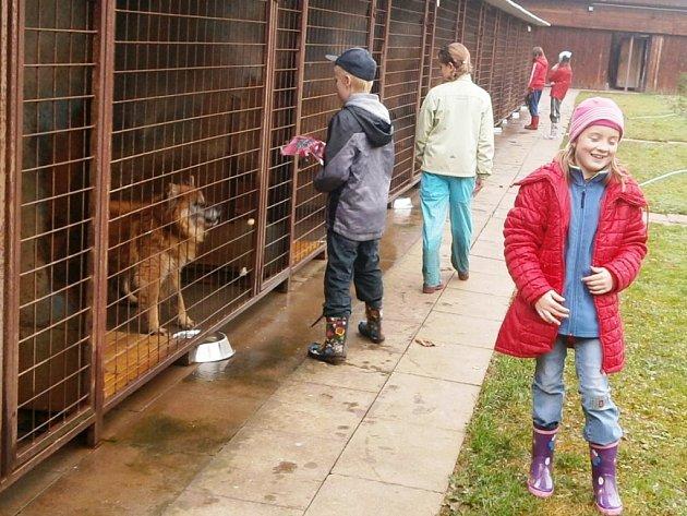 PEJSKAŘSKÝ KROUŽEK funguje při útulku ve Dvoře. Děti se v něm učí starat o potřeby čtyřnohých mazlíčků.