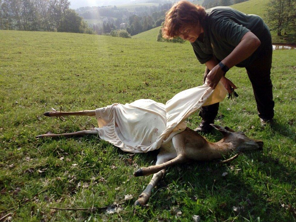 Vlci řádili v Bernarticích, zahubili deset daňků v oboře.