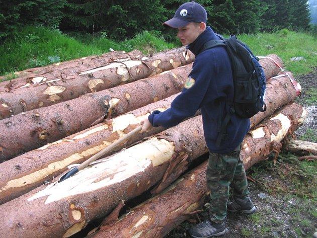 Dřevo - Trutnov