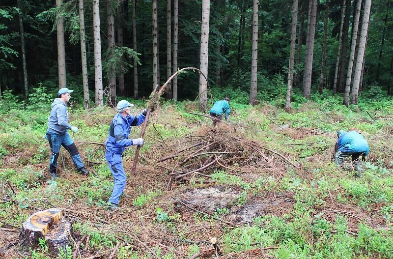 Dobrovolníci uklízí větve po těžbě smrků na místě druhé nuly k harrachovské 100.
