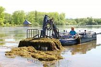 Začátkem června se uskutečnilo odstraňování vodních rostlin z části rybníka Kačák ve vrchlabské lokalitě Vejsplachy.