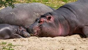 Dvorský safari park otevře v plném rozsahu 25. května