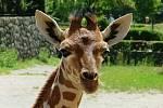 Žirafa Terezka