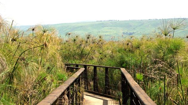 Předmětem ochrany je vedle vodního ptactva v Chule také papyrus papírodárný, který se jinde v Izraeli nevyskytuje.