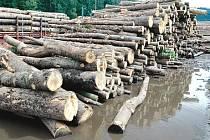 Orkán ničil lesy