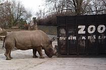 Nosorožci se učí nastoupit do bedny