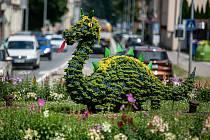 Květinový drak v Trutnove na kruhovém objezdu je unikátním, zpestřením hlavní silnice procházející městem. Drak, který je i ve znaku města symbolicky dřímá uprostřed křižovatky a je vsazen mezi květiny a dokonce je jimy i porostlý.
