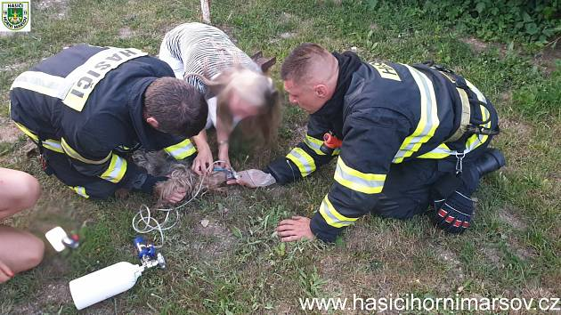 Hasiči zachránili psa. Vynesli ho z hořící chalupy