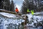 Vítr a těžký sníh koplikuje dopravu a život na horách. Popadané stromy uzavřely v pondělí cestu mezi Hoffmanovými boudami a Černým Dolem v Krkonoších