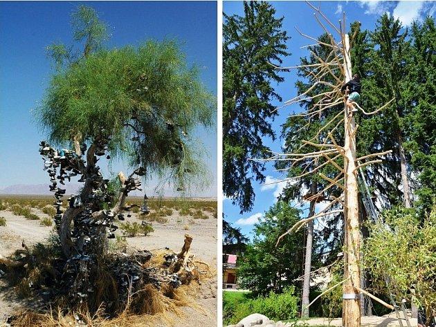 NA BOTOVNÍK můžete narazit třeba v odlehlých končinách v USA i Kanadě. Od srpna se ale nemusíte trmácet tak daleko, stačí si zajet do Harrachova. Zdejší strom (vpravo) čeká na své ozdoby.