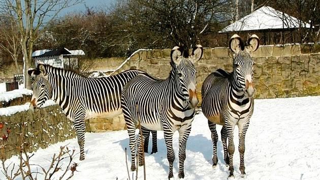 Vánoční zoo