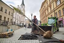 Instalace nových stromů na opravené pěší zóně v centru Trutnova.