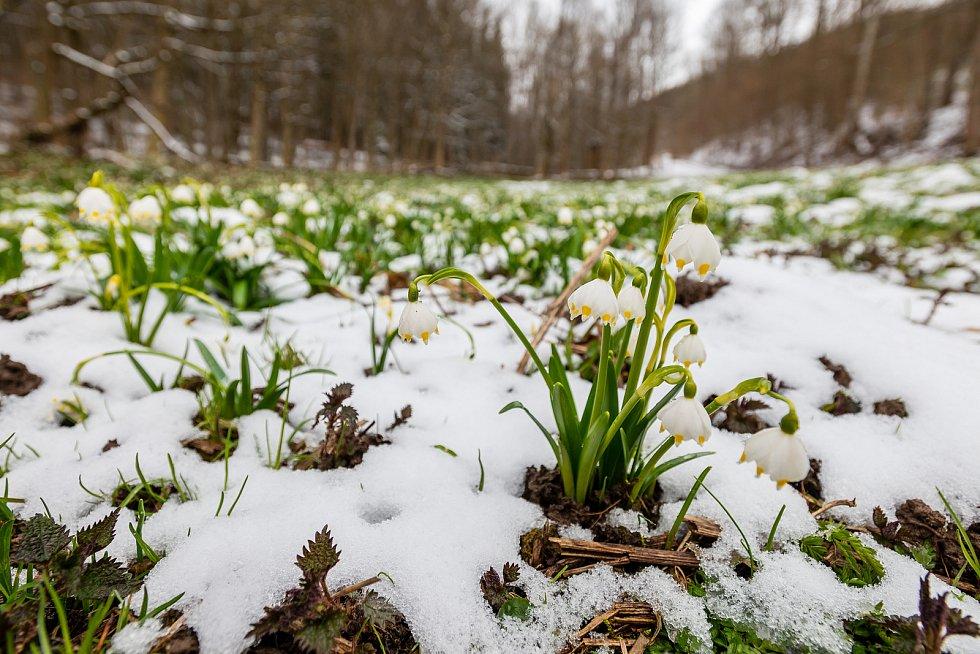 Zasněžené Sklenářovice u Mladých Buků ve středu 7. dubna.