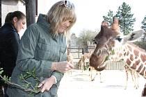 Mladé žirafy dostaly jména