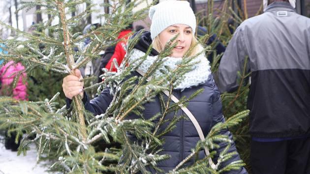 O vánoční stromky z lesů národního parku byl tradičně velký zájem.