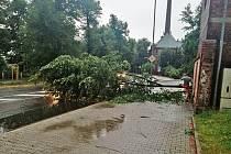 Spadlý strom ve Dvoře Králové