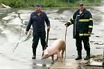 Zaječí potok v Markoušovicích u Velkých Svatoňovic ve čtvrtek po prudké bouřce vylil z břehů a zaplavil část obce. Na místě zasahovali dobrovolní hasiči. Voda natekla i do nedalekého masokombinátu Pokr.