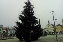 Od pátku stojí vánoční strom na náměstí T. G. Masaryka ve Dvoře Králové nad Labem.