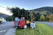 Firma Covenant z Prahy přivezla v pátek do Pece pod Sněžkou vánoční strom. Její šéf šel u té příležitosti volit na místní úřad.